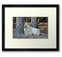 INDEED IT IS GOOD TO BE KING Framed Print