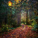 Fall On The Back Road by Charles & Patricia   Harkins ~ Picture Oregon