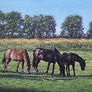 three horses in field by martyee