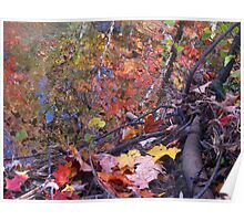 The beauty of leaves in the rainbow of life Poster