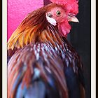 Mr. Rooster by Renee Eppler