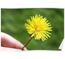 Dandelion In My Hand Poster