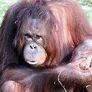 Orangutan  by JenniferLouise