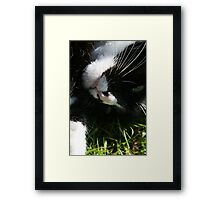 Cat Rolling in the Grass Framed Print