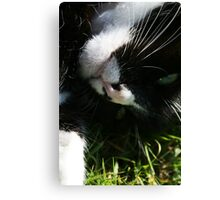 Cat Rolling in the Grass Canvas Print