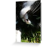 Cat Rolling in the Grass Greeting Card