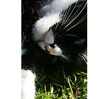 Cat Rolling in the Grass Photographic Print