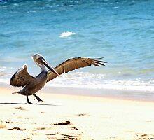 Pelican by Tracy Friesen