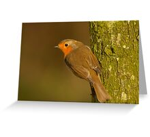 Robin hanging on a tree Greeting Card