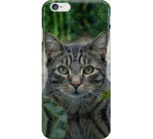 Cat Peep iPhone Case/Skin