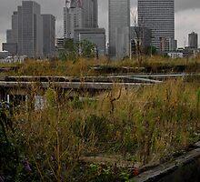 Canary Wharf by Matt Thorne