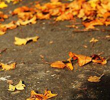 Leaves Under Foot by Áine Warren