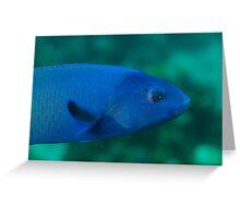 Blue Wrasse Greeting Card