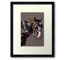 A SHIRE PORTRAIT Framed Print