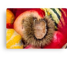 pumpkins and curly chestnut Canvas Print