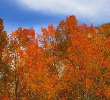 Fall Is Beautiful In The Sierras by marilyn diaz