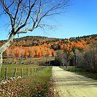 Fall Road by Richard Ahne