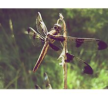 12 Spotted Skimmer Photographic Print