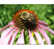 A Bee's Wings Photographic Print