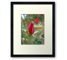 LITTLE RED ROSEBUD Framed Print