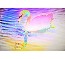 Bright pink left facing swan Photographic Print