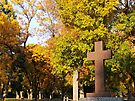 Autumn Glory by Greg Belfrage