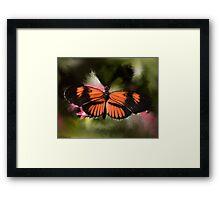 Black and Orange Butterfly Framed Print
