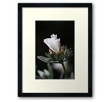 The Morning Glory Framed Print