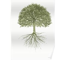 Tree With Roots Poster