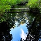 Creek Reflections by Sharon Woerner