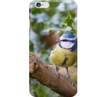 Blue Tit (Cyanistes Caeruleus) Perched in a Tree iPhone Case/Skin