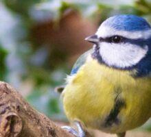 Blue Tit (Cyanistes Caeruleus) Perched in a Tree Sticker