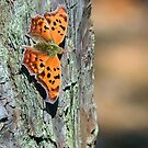 Orange Question Mark Butterfly by Sharon Woerner
