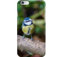 A Blue Tit (Cyanistes Caeruleus) Perched on a Branch iPhone Case/Skin