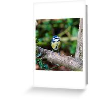 A Blue Tit (Cyanistes Caeruleus) Perched on a Branch Greeting Card
