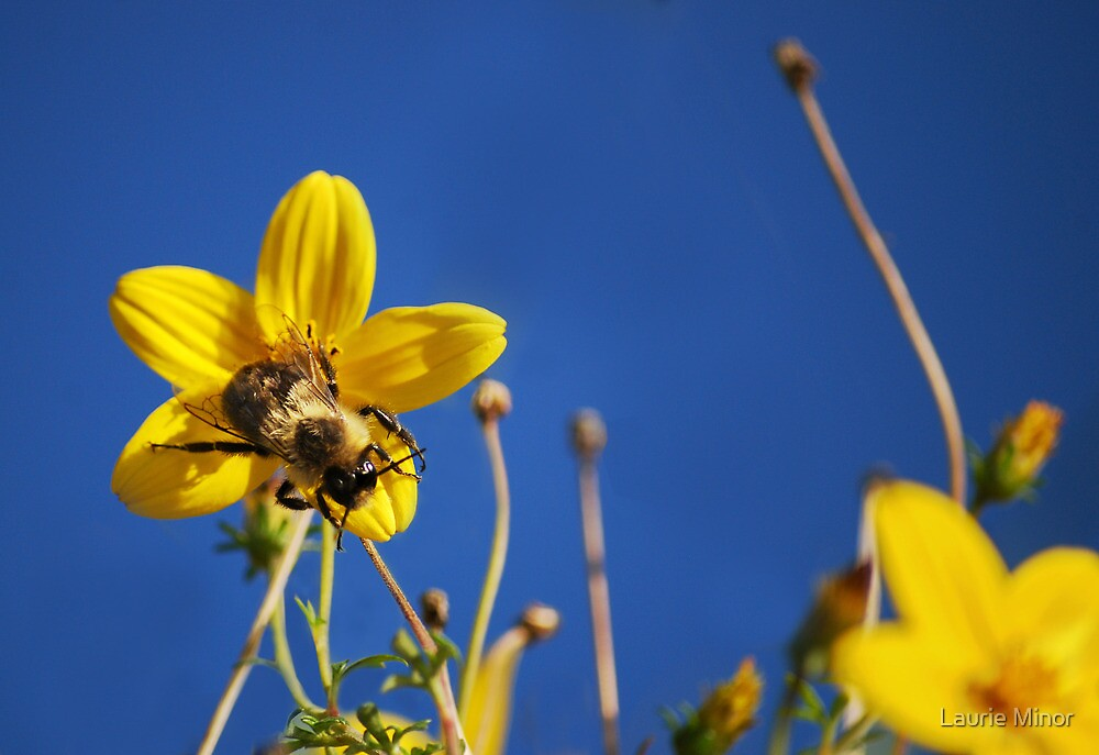 October Bee & Flower by Laurie Minor