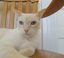 Oscar on Montecore's Chair by montecore827