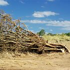 Flattened Tree by James Milton
