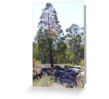 Tree with Lens Flare Greeting Card