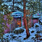 Nestled In The Pines by Diana Graves Photography