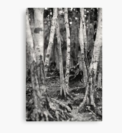 Mangroves - Black and White Canvas Print