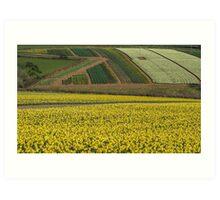 Daffodil cultivation Art Print