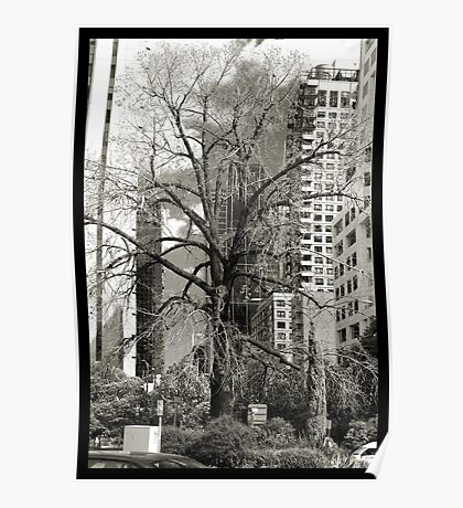 The only deciduous tree in the villiage - Black and White Poster