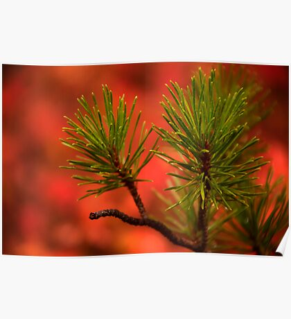 Red and Green in Nature Poster