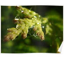 droplets on greenery Poster