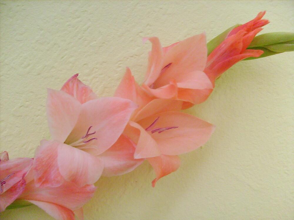 Pink gladiolus by Ana Belaj