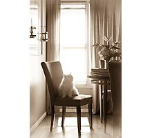 CAT ON DINING CHAIR Photographic Print