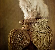 WICKER CAT by PhotOptions