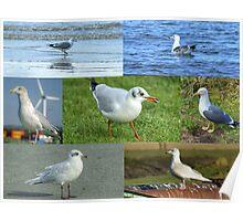 British Gulls Collage Poster