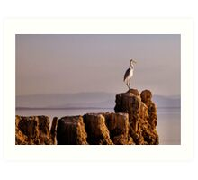 SALTON SEA EGRET Art Print